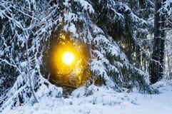 Nette boom in de winterzonsondergang royalty-vrije stock afbeeldingen