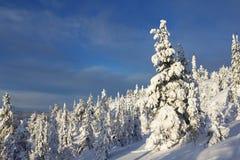 Nette boom die met sneeuw wordt behandeld Royalty-vrije Stock Foto's