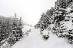 Nette Boom mistig Forest Covered door Sneeuw in de Winterlandschap Stock Afbeelding