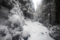 Nette Boom mistig Forest Covered door Sneeuw in de Winterlandschap Royalty-vrije Stock Afbeelding