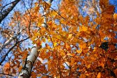 Nette bunte Blätter auf dem blauen Himmel Lizenzfreie Stockfotografie