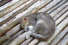 Nette Cat Sleeping auf einer Holzbank - kühles Entspannung und ruhiger Rest lizenzfreie stockbilder