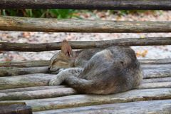 Nette Cat Sleeping Peacefully auf einer Holzbank - kühles Entspannung - Energie-Haar stockbilder