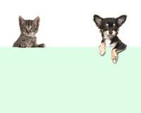 Nette Chihuahuahunde- und -getigerter Katzebabykatze, die über einer Grünbuchgrenze hängt Stockbilder