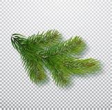 Nette die tak op achtergrond wordt geïsoleerd Kerstboomtak Realistische Kerstmis Vectorillustratie Ontwerpelement voor stock afbeelding