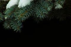nette die takken met sneeuw worden behandeld stock fotografie