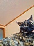 Nette entspannende Katze stockfotos