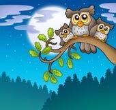 Nette Eulen auf Zweig nachts Stockfotografie