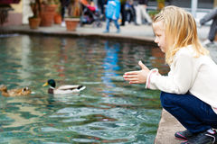 Nette Fütterungsenten des kleinen Mädchens im Teich Stockfoto
