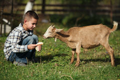Nette Fütterungsziege des kleinen Jungen Stockfotos