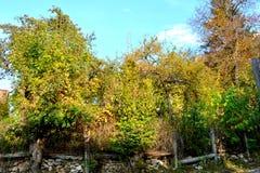 Nette Farben im Garten Typische Landschaft in der Stadt Brasov, Siebenbürgen, Rumänien, Herbsteigenschaftsfarben Stockfoto
