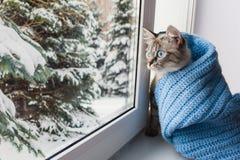 Nette flaumige Katze mit blaue Augen sititng auf einem Fensterbrett lizenzfreies stockbild