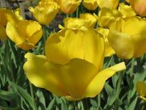 Nette gelbe Blume Stockfoto