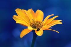 Nette gelbe Sommerblume empfindliche gelbe Blume Stockbilder