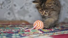 Nette graue Kätzchenspiele auf Teppich zu Hause stock footage