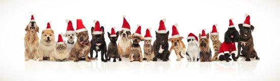 Nette Gruppe Weihnachtskatzen und Hunde der unterschiedlichen Zucht lizenzfreies stockbild