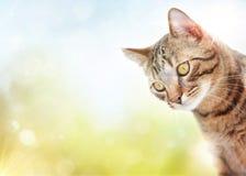 Nette Hauskatze mit undeutlichem Hintergrund Stockfoto