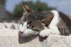 Nette Haustierkatze Stockbild