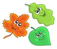 Nette Herbstblätter Stockbild