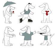 Nette Hunde Lizenzfreies Stockfoto