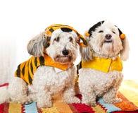 Nette Hunde in den Kostümen Lizenzfreie Stockfotografie