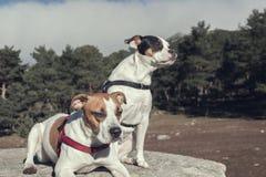 Nette Hunde, die im Wald einen Weg genießen stockfoto
