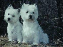 Nette Hunde in Polen Stockfotografie