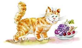 Nette hungrige Ingwer-Katze, die Früchte betrachtet Stockbild