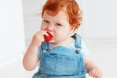 Nette Ingwerkleinkindbaby-Probierenerdbeeren lizenzfreies stockfoto