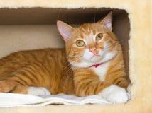 Nette inländische rote Katze in einem Haus Lizenzfreies Stockfoto