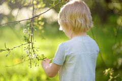 Nette Jagden des kleinen Jungen f?r Osterei auf bl?hendem Baum der Niederlassung lizenzfreies stockfoto