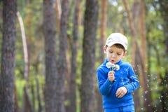 Nette 4 Jahre alte Junge mit Löwenzahn draußen am sonnigen Sommertag Lizenzfreie Stockbilder