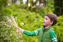 Nette 4 Jahre alte Junge mit Löwenzahn draußen am sonnigen Sommertag Stockfoto