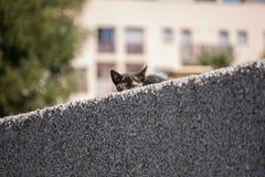 Nette junge Katze der getigerten Katze, die von hinten eine Wand späht lizenzfreies stockfoto