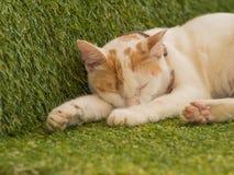 Nette junge Katze, die auf grünem Rasen, Thailand schläft Stockfotografie