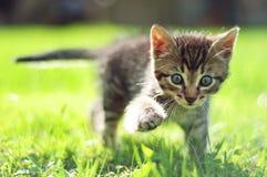Nette junge Katze, die auf Gras geht stockbilder