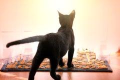 Nette junge schwarze Katze Lizenzfreie Stockfotografie