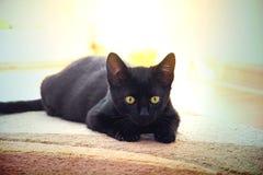 Nette junge schwarze Katze Lizenzfreies Stockbild