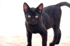 Nette junge schwarze Katze Lizenzfreie Stockfotos