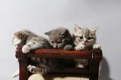 Nette Kätzchen Lizenzfreies Stockbild