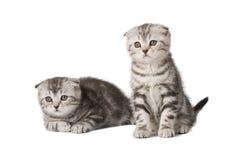 Nette Kätzchen Lizenzfreies Stockfoto