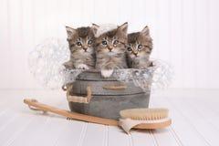 Nette Kätzchen in der Waschschüssel, die durch Schaumbad gepflegt erhält Stockfotografie