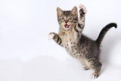 Nette Kätzchen, die auf weißem Hintergrund spielen Stockfoto