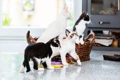 Nette Kätzchen, die mit Neugier schauen Stockfoto