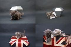 Nette Kätzchen, die oben, Gitter 2x2, nach Schirmen suchen Stockfotografie