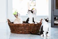 Nette Kätzchen, die oben mit Neugier schauen Stockfotos