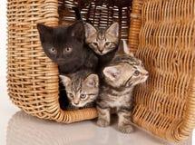 Nette Kätzchen in einem Picknickkorb Stockfotos