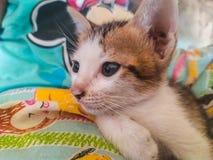 Nette Kätzchen entspannen sich auf dem Bett stockfoto