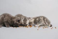 Nette Kätzchen hungrig Stockfoto