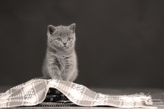 Nette Kätzchen sitzt auf einem Stück des Stoffes Lizenzfreie Stockbilder